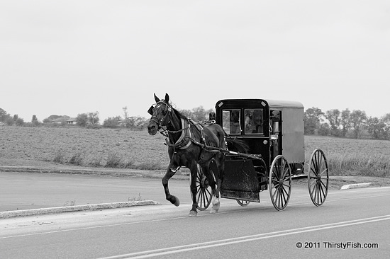 Amish Buggy - No Church Hopping?