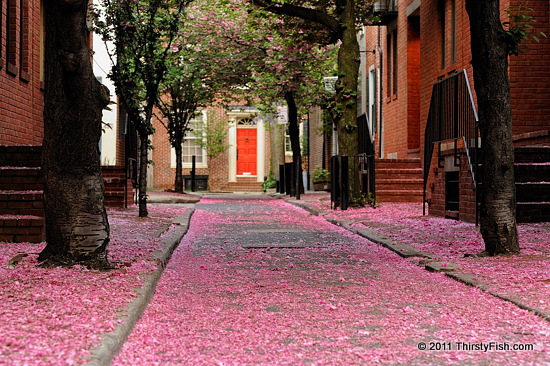 Carpet of Pink Blossoms
