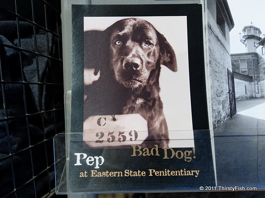 Pep, The Bad Dog!