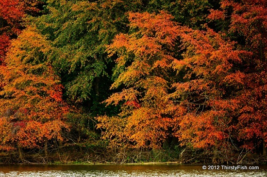 Fall Colors at John Heinz National Wildlife Refuge