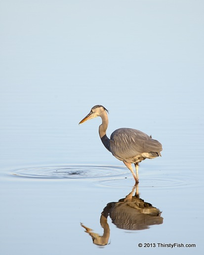 Heron: Reflection, Refraction, Diffraction