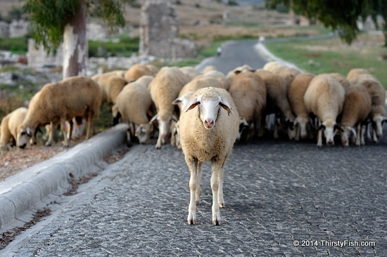 Roadblock At Patara